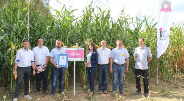 Przepis na rekordową kukurydzę