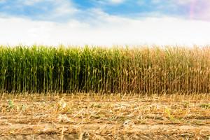 Pomoc po suszy będzie udzielana jednak inaczej niż w ubiegłym roku?