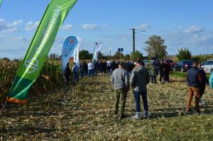 Zielona Pola kukurydzy z Osadkowskim w Wielkopolsce; Fot. Katarzyna Szulc