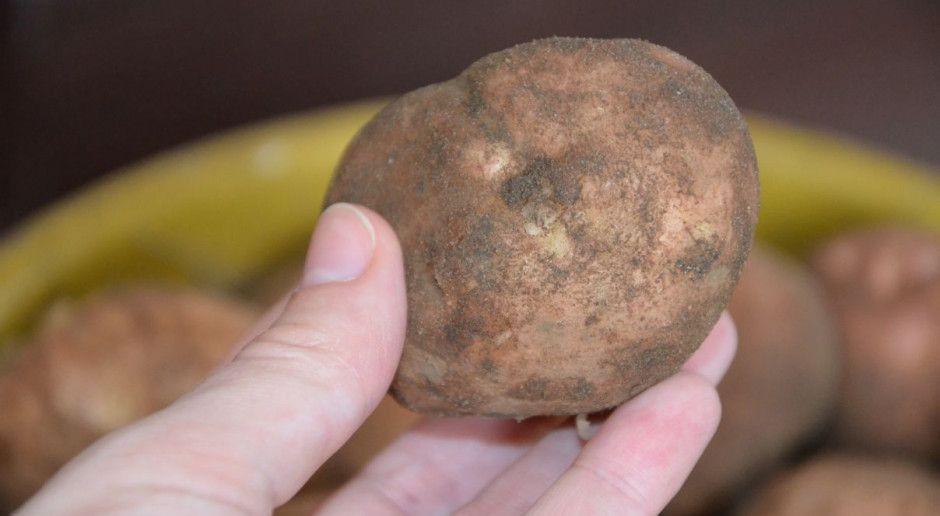 Ziemniaka więcej niż w roku ubiegłym, ceny mają spadać