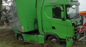 Auto zderzyło się z tirem do transportu zwierząt