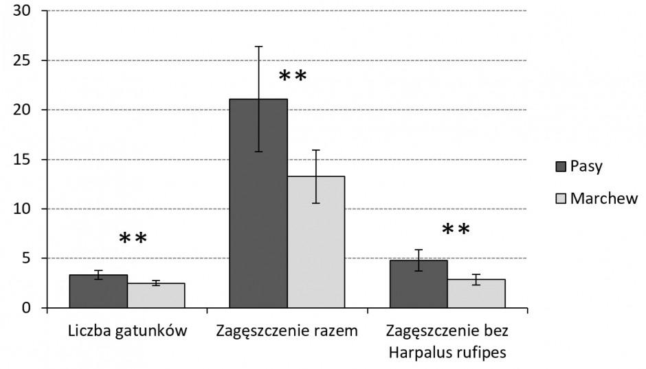 Średnia (na pułapkę i termin odłowów) liczba gatunków oraz wskaźnik zagęszczenia biegaczowatych w pasach kwietnych i przyległej uprawie marchwi. Istotność statystyczna wg ogólnego modelu liniowego (GLM) z pomiarami powtarzanymi