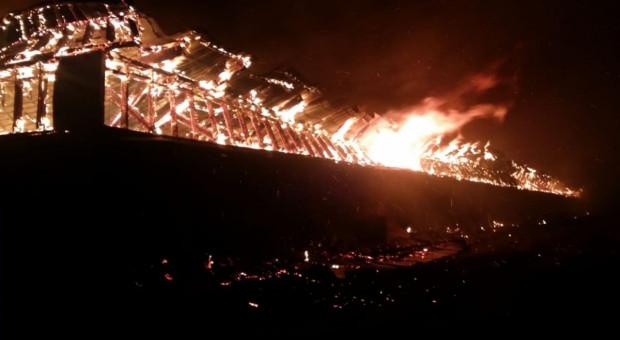 Pożar chlewni na Podlasiu - spłonęły świnie