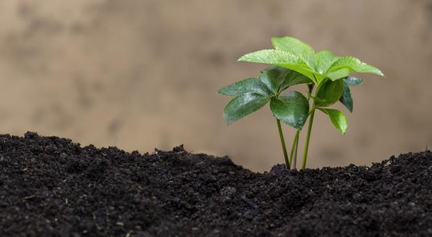 USA: Rośnie udział gospodarstw ekologicznych w produkcji rolniczej