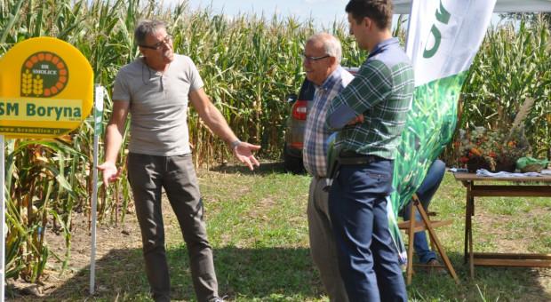 Trudny sezon kukurydziany