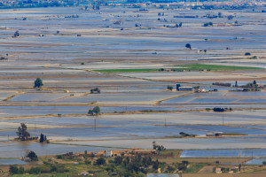 Rząd Hiszpanii: powodzie zniszczyły ponad 300 tys. hektarów upraw