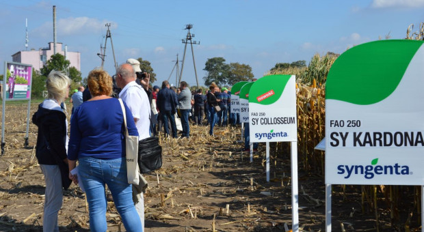 Polowe spotkania z kukurydzą Syngenta