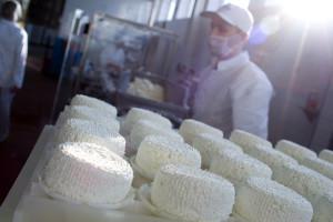 Seria spadków notowań produktów mlecznych przełamana