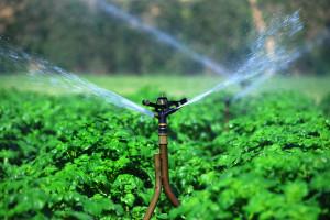 Ruszają dotacje na nawadnianie gospodarstw