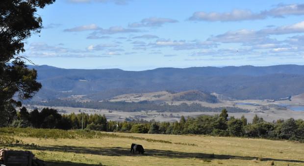 Australijskie prognozy produkcji roślinnej