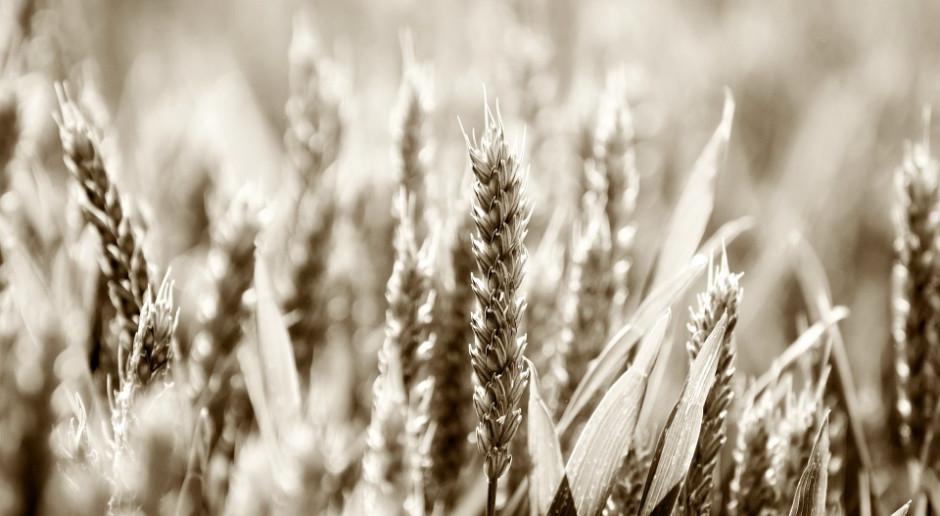 Patenty na rośliny: Parlament Europejski wzywa do wykluczenia