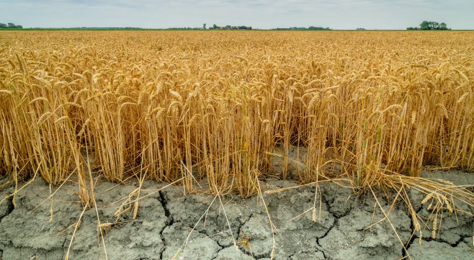 ARiMR podaje uaktualnione stawki pomocy po suszy