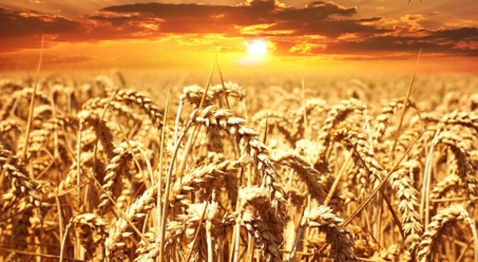 Coceral: Wyższa prognoza produkcji zbóż  w UE niż w maju 2019 r.