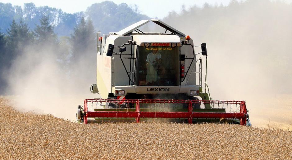 Rosja: Zebrano ponad 105 mln ton zbóż i bobowatych