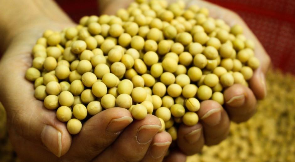 IGC: Lekki spadek prognozy światowej produkcji soi