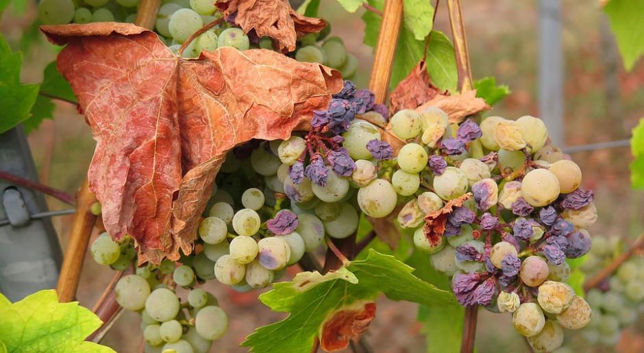 Wnioski o pomoc suszową od 3 do 31 października br., uściślenie stawek