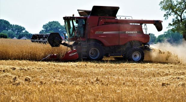 Rosja: Zebrano ponad 107 mln ton zbóż i bobowatych