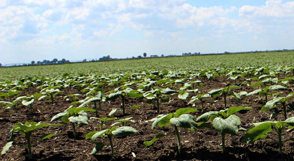 Corteva Agroscience i Pro Farm Technologies wspólnie pracują nad zaprawami biologicznymi