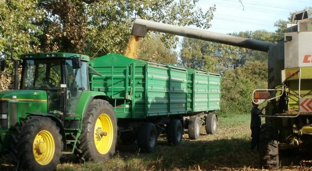 Ukraina: Zebrano ponad 45 mln ton zboża i bobowatych
