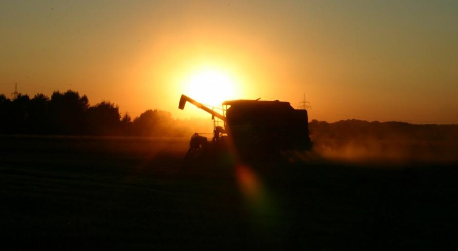 IGC: Prognoza światowej produkcji zbóż ogółem w sezonie 2019/2020, bez zmian