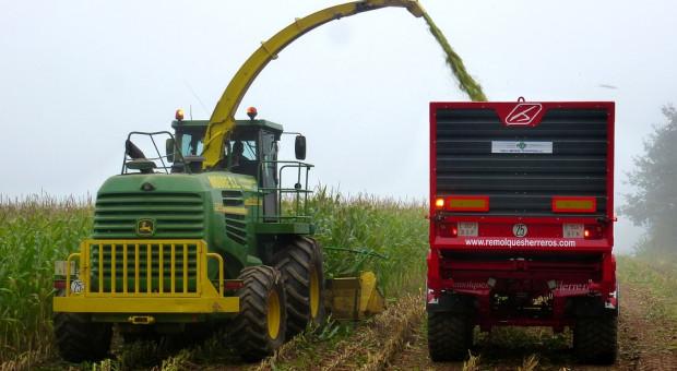 KE: Wrześniowa prognoza plonowania niektórych roślin uprawnych w 2019 r. w UE