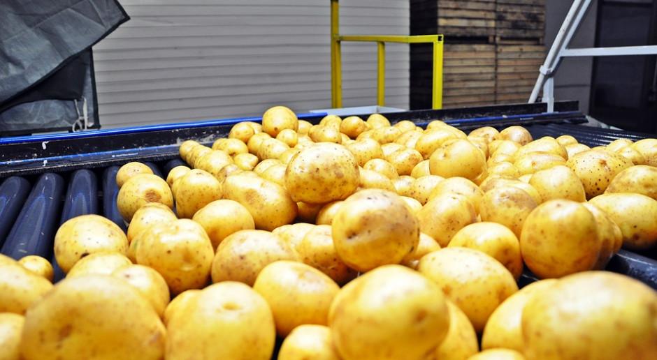 Niemcy: Zbiory ziemniaków w 2019 r. poniżej średniej