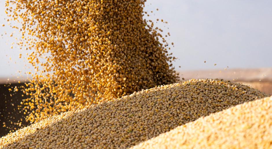 Amerykańska soja najdroższa od 7 miesięcy