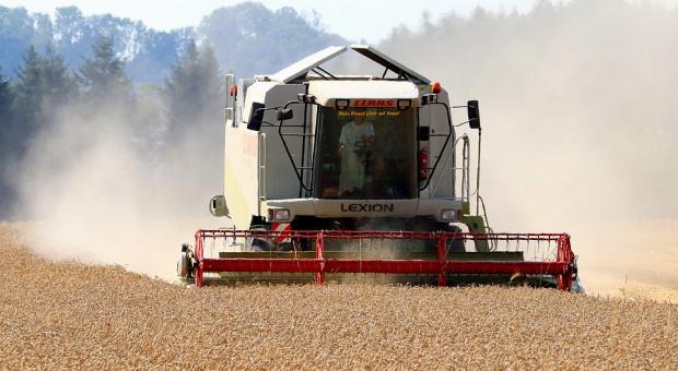 Rosja: Zebrano ponad 112 mln ton zbóż i bobowatych