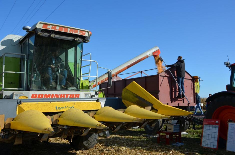 Podczas Dnia Kukurydzy zbierano kilkanaście odmian kukurydzy, następnie podano jej plony i wilgotność, fot. M. Tyszka