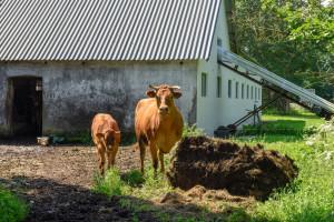 Dania: Coraz mniej pełnoetatowych rolników