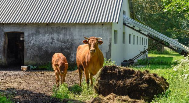 Senacka komisja - za poprawkami do ustawy dot. organizacji hodowli zwierząt