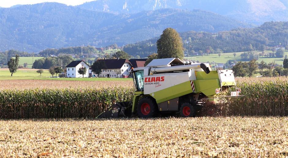 Ukraina: Zebrano ponad 10 mln ton kukurydzy