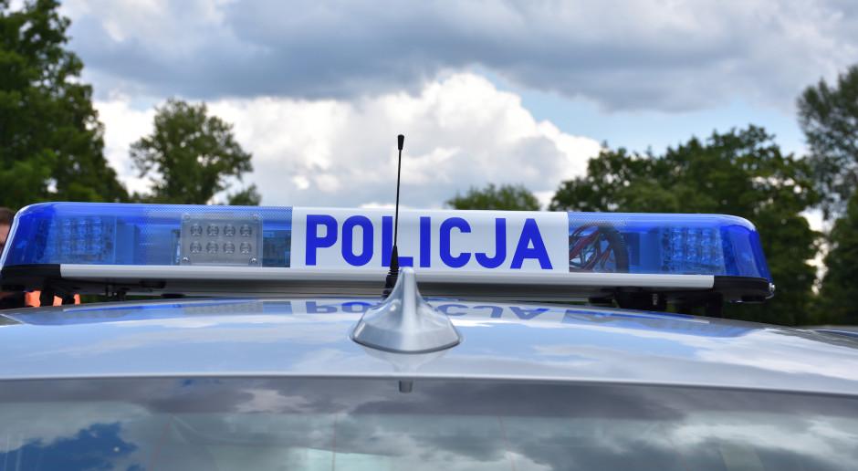 Szczenięta wyrzucone z samochodu na ulicę - policja szuka sprawcy