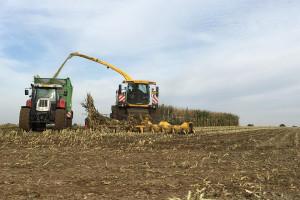 """Trwa nabór na """"Rozwój przedsiębiorczości – rozwój usług rolniczych"""""""