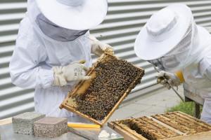 Masowe wymieranie pszczół w Rosji