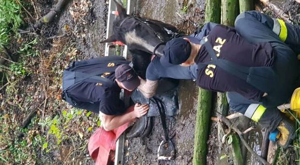 Koń z amazonką ugrzązł po szyję w błocie