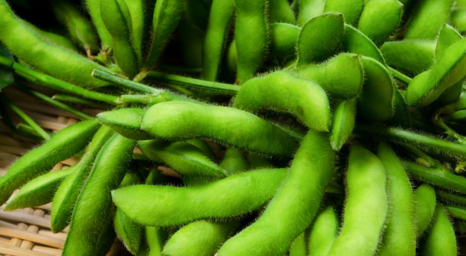 Soja w USA najdroższa od 8,5 miesiąca