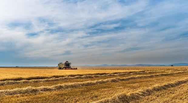 Rosja: Zebrano 116 mln ton zbóż i bobowatych