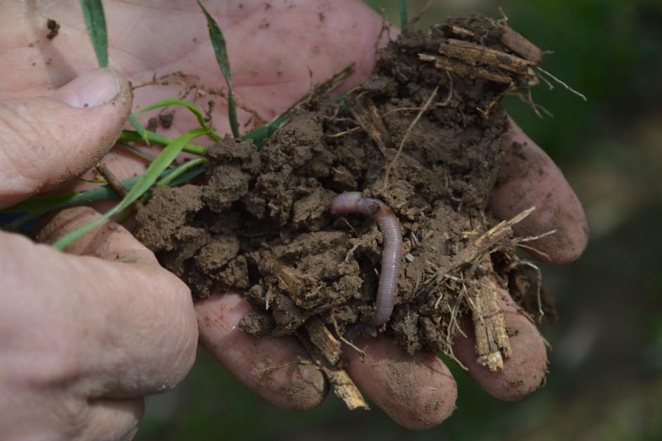 W sesji poświęconej uprawie bezorkowej w centrum uwagi będzie gleba oraz korzyści wynikające z przejścia na ten system uprawy. Nie zabraknie rozmowy o problemach jakie pojawiają się w uprawie bezorkowej oraz praktycznych poradach jak przestać orać w swoim gospodarstwie.