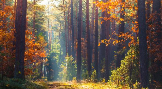 Leśna bimbrownia na Podlasiu zlikwidowana