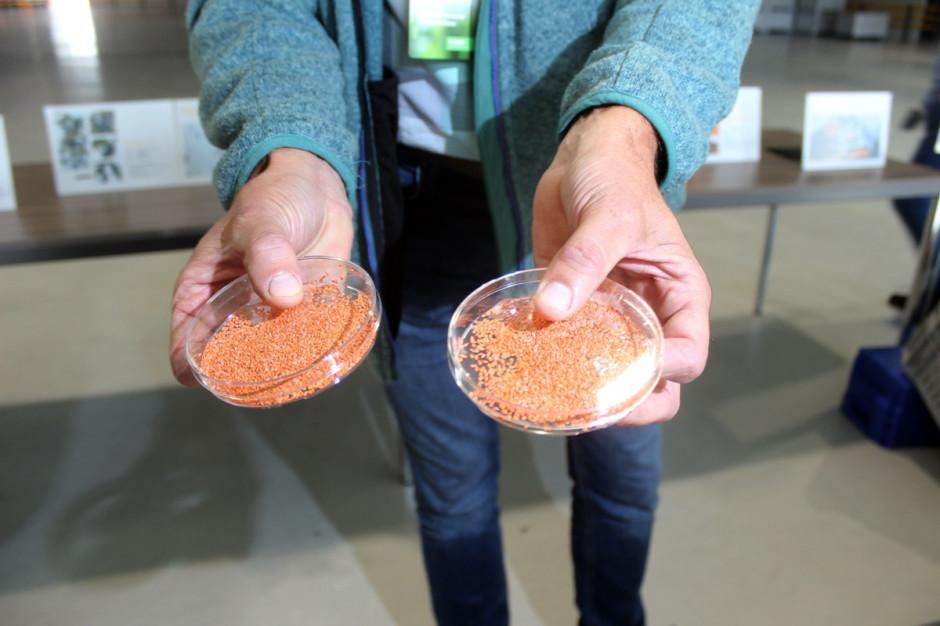 Nunhems ma 1200 odmian nasion w 25 uprawach warzywnych, w tym wiodące odmiany marchwi Fot. A. Kobus