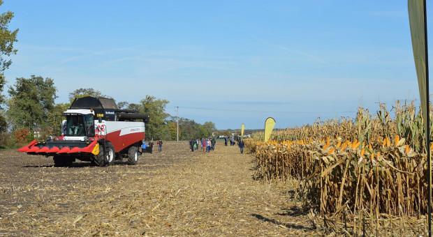 Dni kukurydzy FarmSaat