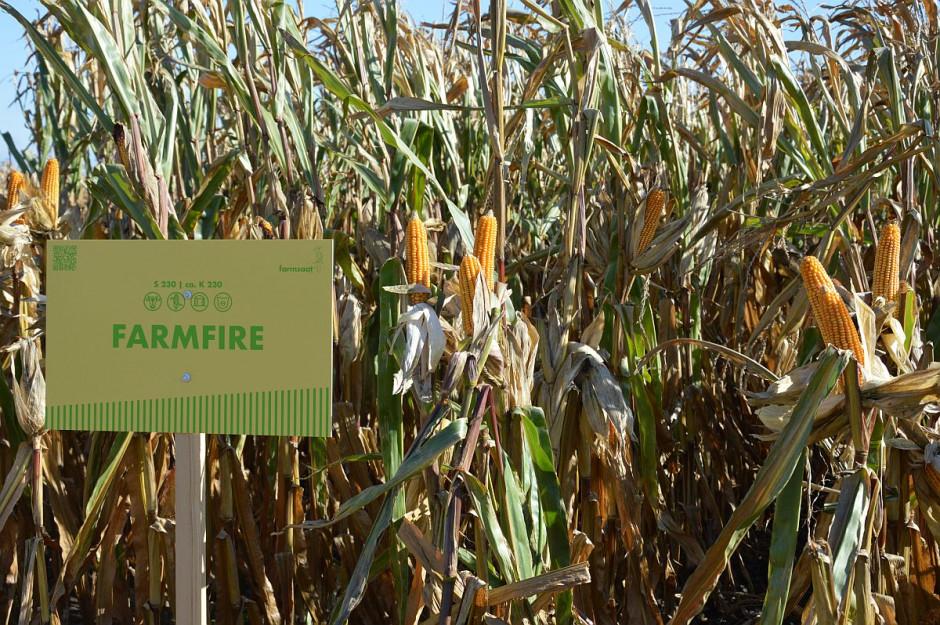 Odmiany kukurydzy FarmSaat - Osięciny 2019; Fot. Katarzyna Szulc