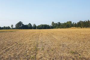 Jak poprawić bilans materii organicznej w glebie?