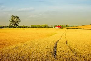 RPO przeciw wyłączeniu ziemi z dzierżaw