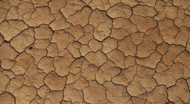 Wnioski o pomoc po suszy do 15 listopada