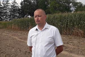 Jak uchronić plantację kukurydzy przed skutkami suszy?