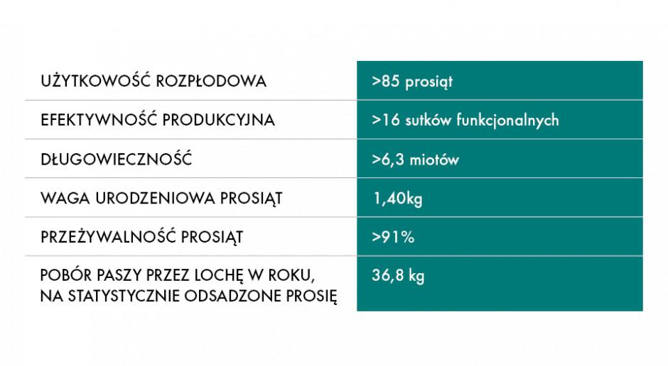 Efektywność produkcyjna loszki CG36