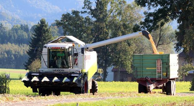 Rosja: Zbiory kukurydzy na ziarno wyższe niż oczekiwano