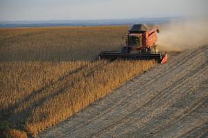 Rosja: Zebrano  prawie 120 mln ton zbóż i bobowatych